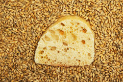 Ciabatta and wheat Royalty Free Stock Images