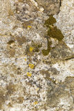 Ściana cement Fotografia Royalty Free