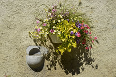 Ściana i kwiaty Obraz Royalty Free