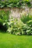 ściana ogrodowa Zdjęcie Stock