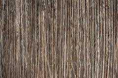 Ściana trzcinowi badyle zdjęcia royalty free