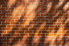Ściana z Drzewnym cieniem Obrazy Royalty Free