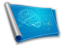 Cianografia del cervello umano fotografie stock libere da diritti