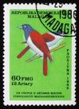 Cianolanius  madagascariensis, circa 1986 Royalty Free Stock Image
