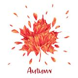 Ciao Autumn Watercolor Floral Design con la foglia di acero Insegna stagionale di caduta, manifesto, stampa, vendita, modello di  illustrazione vettoriale