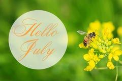 Ciao cartolina d'auguri di luglio con il fondo di estate Fotografia Stock Libera da Diritti
