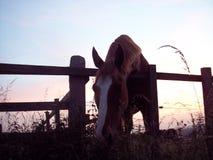 Ciao cavallo Fotografia Stock Libera da Diritti