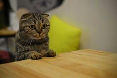 Ciao da un gattino Immagini Stock Libere da Diritti