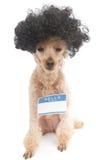 Ciao il mio nome è… cane del nerd Fotografia Stock