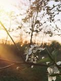 Ciao immagine floreale della molla bei fiori di fioritura in soli fotografia stock