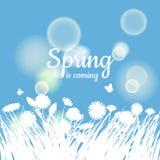 Ciao iscrizione della primavera con l'erba verde e la camomilla su fondo verde Priorità bassa della sorgente Progettazione per le Fotografia Stock Libera da Diritti