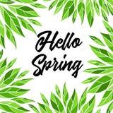 Ciao primavera Carta di vettore con iscrizione e le foglie verdi Immagini Stock