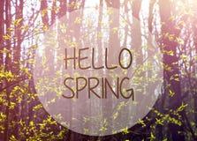 Ciao primavera Luce solare ed alberi di mattina con le prime foglie verdi nella foresta Fotografia Stock Libera da Diritti