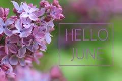 Ciao testo di giugno sul fondo lilla del ramo fotografia stock libera da diritti