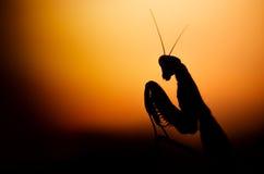 Ciao tramonto Immagini Stock