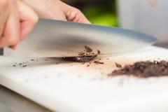 Ciapanie czekolada Obraz Royalty Free