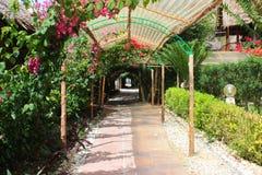 Ciasny zielony przejście między porosłymi kwiatami i roślinami zdjęcie royalty free