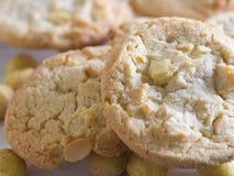 ciasteczka czekoladowe orzeszki macadamia white Zdjęcie Stock