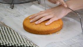 Ciasto szef kuchni ciie g?bka tort na warstwach Tortowy proces produkcji zdjęcie wideo