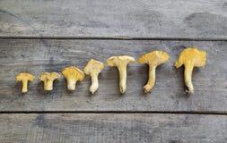 Cibarius amarillo del cantharellus del mízcalo en vagos de madera rústicos Fotos de archivo libres de regalías