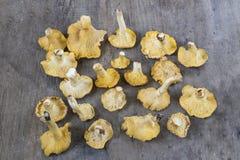 Cibarius jaune de cantharellus de chanterelle sur un Ba en bois rustique images stock