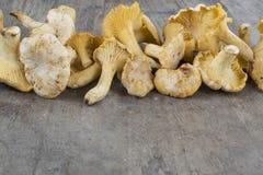 Cibarius jaune de cantharellus de chanterelle sur un Ba en bois rustique photos stock