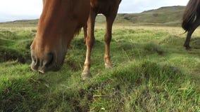 Cibo dei cavalli video d archivio