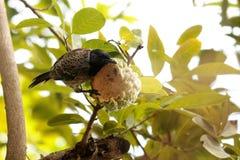Cibo dei passeri dal Nature' frutti del mondo di s immagine stock libera da diritti