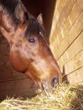 Cibo del cavallo in allentato-casella Fotografia Stock