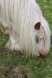 Cibo del cavallo selvaggio Fotografia Stock