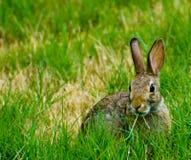 Cibo del coniglio del bambino Immagini Stock Libere da Diritti