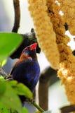 Cibo dell'uccello del fringillide Fotografia Stock Libera da Diritti