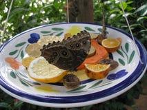 Cibo della farfalla Fotografia Stock