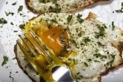 Cibo delle uova fritte fresche con le erbe Immagini Stock Libere da Diritti