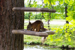 Cibo dello scoiattolo Immagine Stock Libera da Diritti