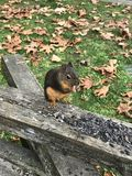 cibo dello scoiattolo nuts Fotografia Stock Libera da Diritti