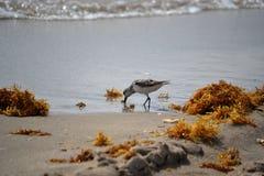 Cibo II dell'uccello Fotografie Stock