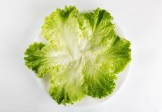 Cibo sano Lattuga verde fresca in un piatto isolato sopra il whi Fotografia Stock Libera da Diritti