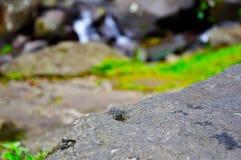 Cibodas water, rock stock images