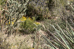 Cibola国家公园例外沙漠场面 免版税库存图片