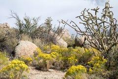 Cibola国家公园例外沙漠场面 库存图片