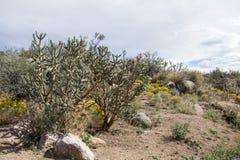 Cibola国家公园干燥沙漠 免版税库存照片