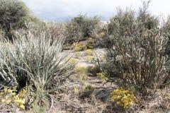 Cibola国家公园沙漠区域 免版税图库摄影