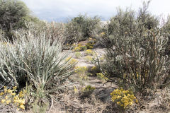 Cibola National Park desert area. Royalty Free Stock Photography