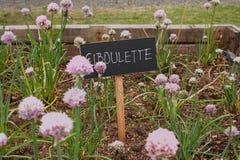 Ciboulette Royalty-vrije Stock Afbeelding