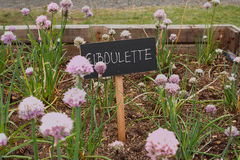 Ciboulette Royalty Free Stock Image