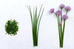 Ciboulette de floraison de vert frais avec les fleurs pourpres Photos libres de droits