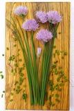 Ciboulette de floraison de vert frais avec les fleurs pourpres Photo libre de droits