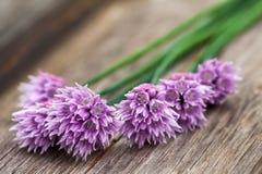 Ciboulette de floraison sur le bois photos stock
