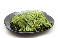 Ciboulette et aneth verts frais Photo libre de droits
